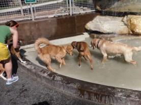 Tucker0607 Clarendon Dog Park (7)