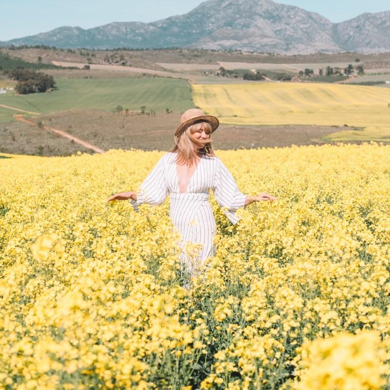 canola field Cape Town