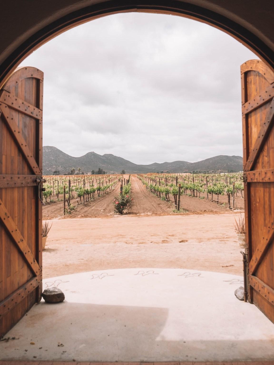valle de guadalupe wine tasting mexico