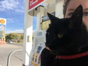 Cat at gas station