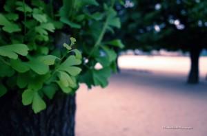 scenery-flower-20140517