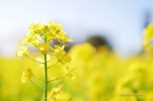 scenery-flower-20160321-02