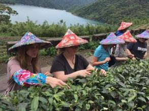 top 30 scenes of mytaiwantour_tea in taipei