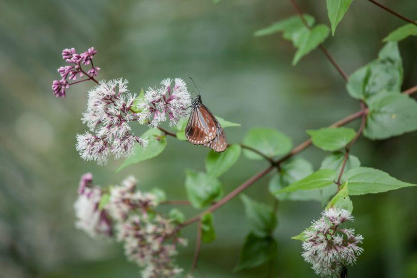 Butterfly near the trail