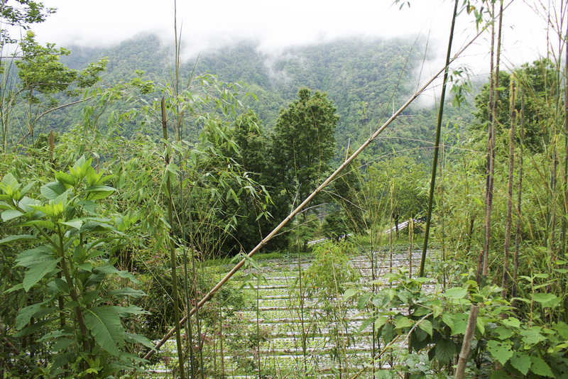 The organic farm in Zhenxibao where our students did a four-day homestay