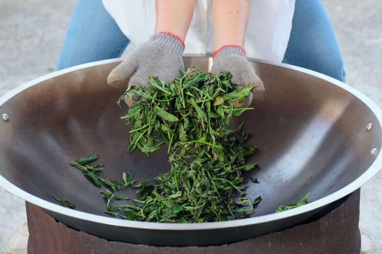 The procedure of making tea- pan fixation (fried tea leaves).