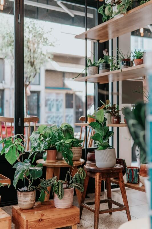 Add more plants to your place to purify the air when living in Taipei.