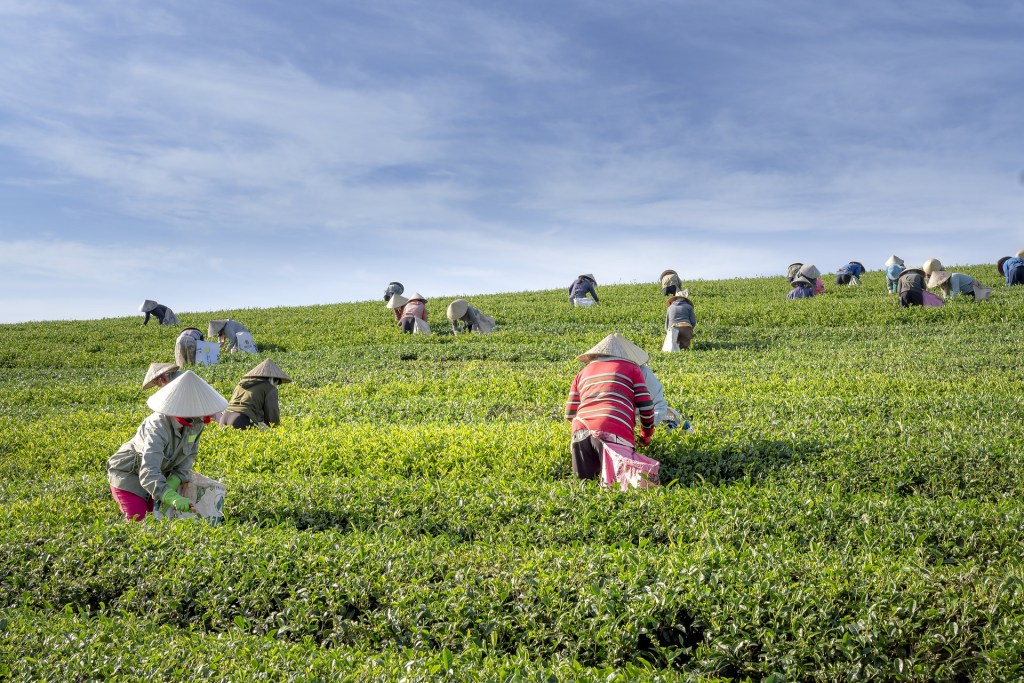 tea 4136332 1920 錫蘭紅茶, 印度奶茶