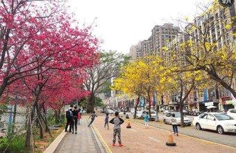 2018 03 09 164823 - 一次能捕捉到盛開的櫻花與黃花風鈴木耶~市區內賞花小確幸~