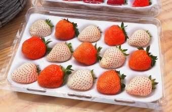 2019 04 08 215057 - 白草莓、水蜜桃草莓好特別!沐光農場,溫室高架草莓園,採草莓超舒適!