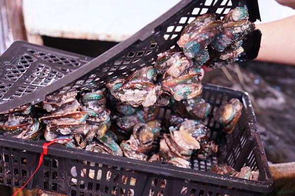 2019 10 15 010320 - 裕泰海產台中海鮮批發商,就在環中路鐵皮屋內,各類海鮮樣式俱全