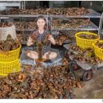 熱血採訪│六月龍蝦價格大崩盤!台中最便宜的龍蝦套餐就在菁選涮涮鍋
