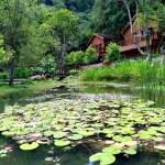 全民適用林務局旅遊優惠,12森林遊樂區年底前擇一免費入園1次;未滿19歲青少年兒童暑假不限次數免費暢遊22間主題樂園