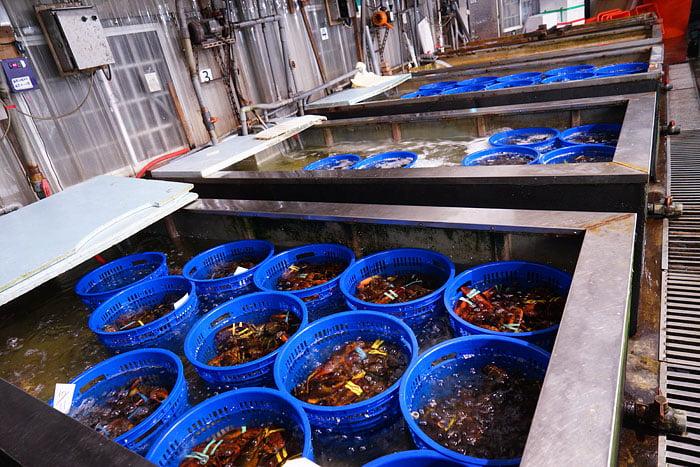 2020 09 21 013522 - 熱血採訪│台中海產批發超商,超大凍庫有夠冷,現場活海鮮也不少,期間限定泰國蝦一斤250