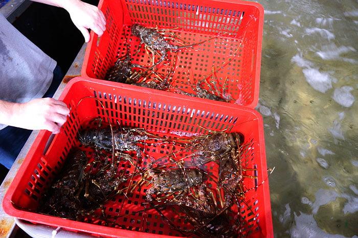 2020 09 21 013542 - 熱血採訪│台中海產批發超商,超大凍庫有夠冷,現場活海鮮也不少,期間限定泰國蝦一斤250