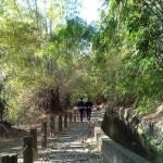 知高圳步道。台中熱門親子景點,輕鬆好走親子步道,好漢坡雪蓮登山步道