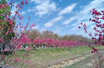 2021 02 18 180954 - 台中免費賞櫻景點,隨便拍隨便美,粉色、桃紅與雪白色櫻花盛開中,中科崴立櫻花公園