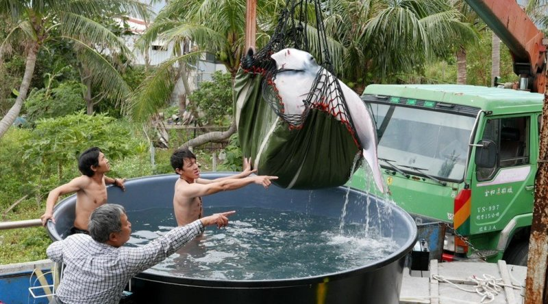 a giant oceanic manta ray is lifted out of a transport unit in Taitung County Taiwan February 16, 2017