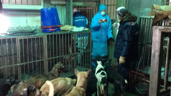 Starving dogs rescued from a dog farm in New Taipei City