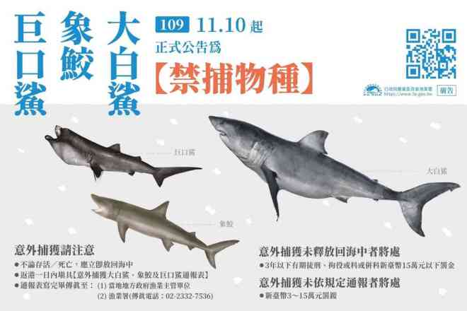 poster announcing ban on three species of shark
