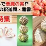 台湾産フルーツ‼バンレイシ(釈迦頭)・レンブ(蓮霧)特集!これらは日本で買えるのか⁉
