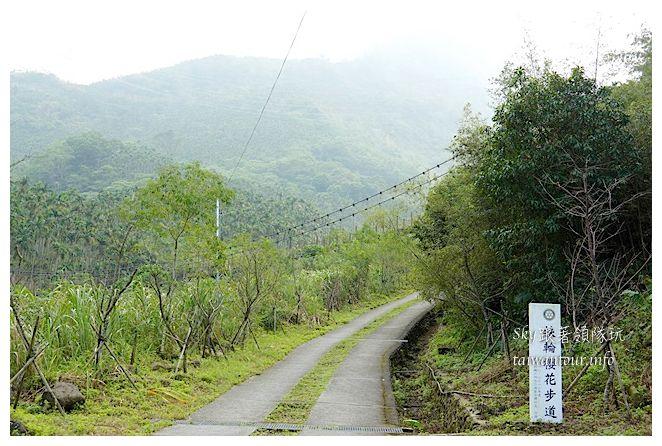古坑華山小天梯情人橋鋼管壩00639