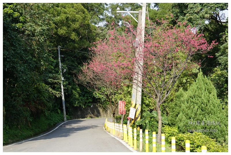 台北景點推薦大同山櫻花林03798