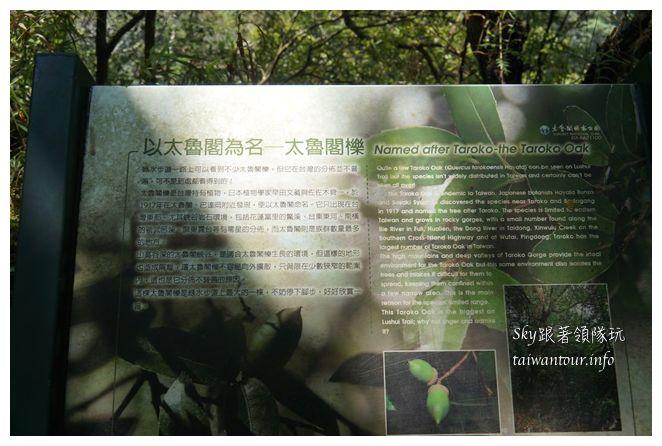 太魯閣綠水合流05221