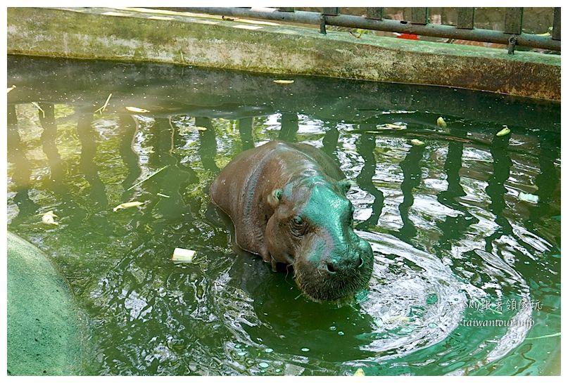泰國親子旅遊綠山動物園kheow kheow00107