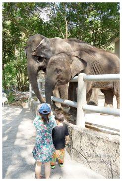 泰國親子旅遊綠山動物園kheow kheow00183