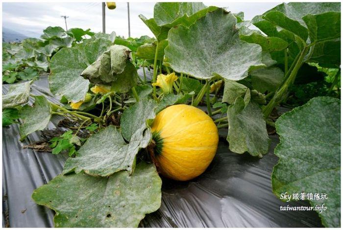 花蓮行程推薦養和屋活動柚遊自在柚來野餐趣DSC06281_结果