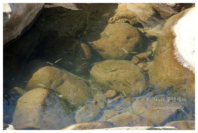 苗栗南庄景點蓬萊自然生態園區42湧泉八卦力05490