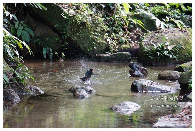苗栗南庄景點蓬萊自然生態園區42湧泉八卦力05585