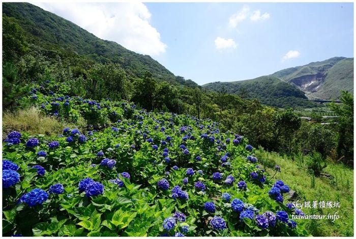 陽明山竹子湖繡球花大賞園DSC02796