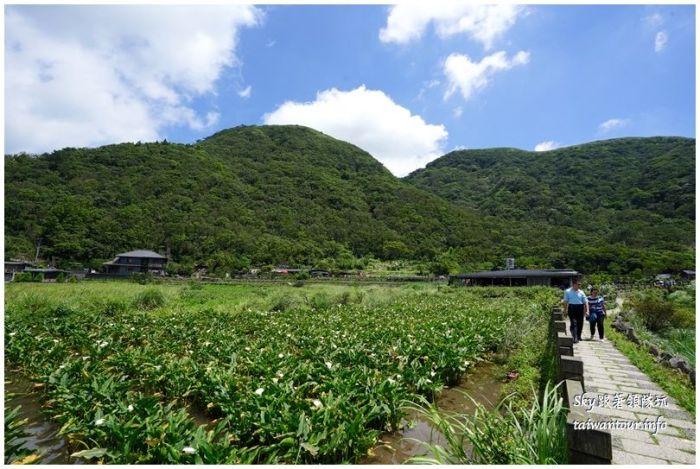 陽明山竹子湖繡球花大賞園DSC02837