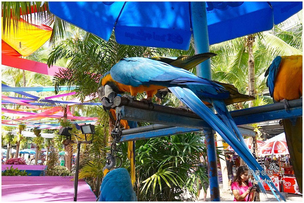 芭達雅大象表演【東芭樂園Nong Nooch Tropical Garden】-跟著領隊玩sky-欣傳媒旅遊頻道