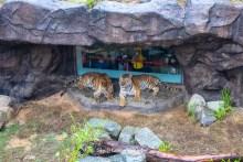 閱讀文章:2020【新竹市動物園親子二日遊】美食.景點加碼方案再送400元