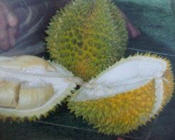 Durian 06