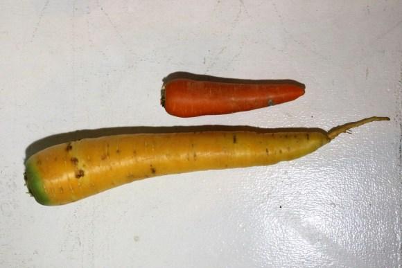 yellow_carrot
