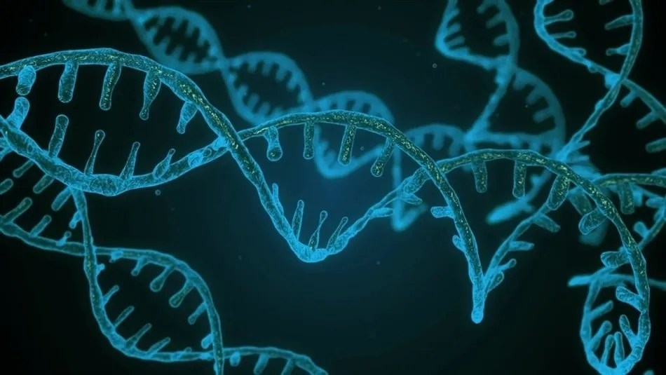 Circular DNA found in cancer cells supports their survival and resistance