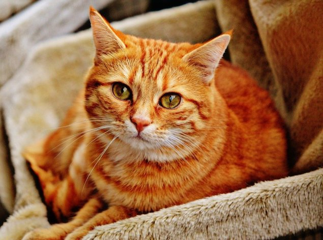 Six ways your pet can boost health and well-being