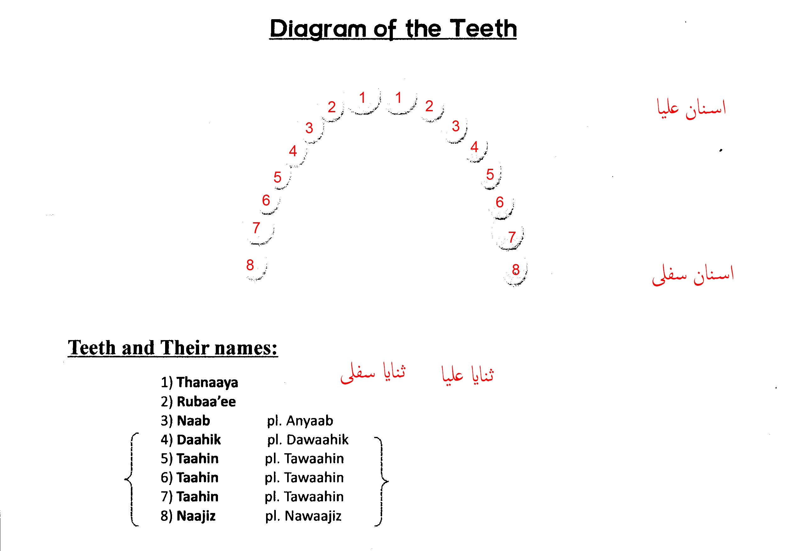 teeth names diagram code alarm ca 110 wiring tajweed way