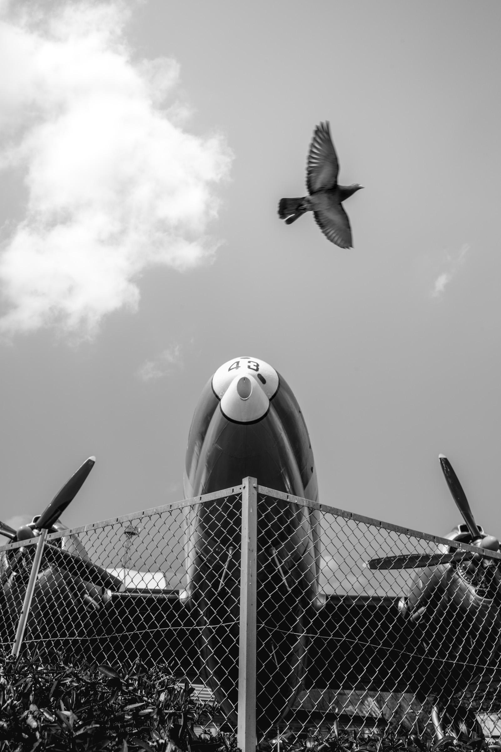 航空記念公園 爆撃機と鳩