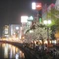 中州のネオンと桜
