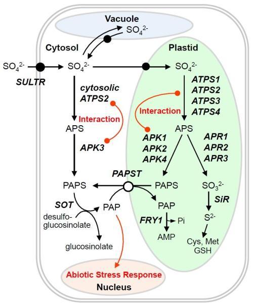 small resolution of sulfur metabolism