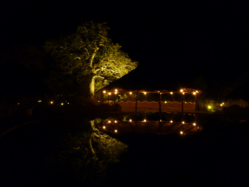 夜のプラネットバオバブ (4)