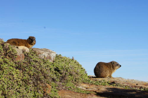 南アフリカ喜望峰 (3)