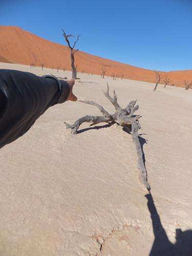 ナミビアナミブ砂漠1 (10)