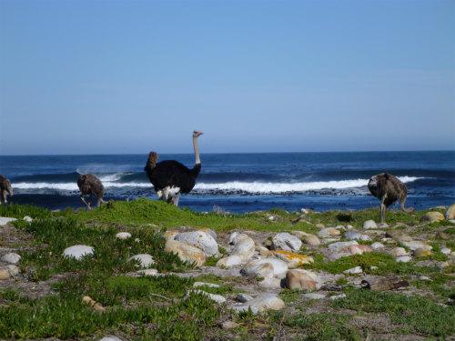 南アフリカ喜望峰 (15)