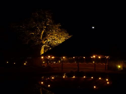 夜のプラネットバオバブ (9)